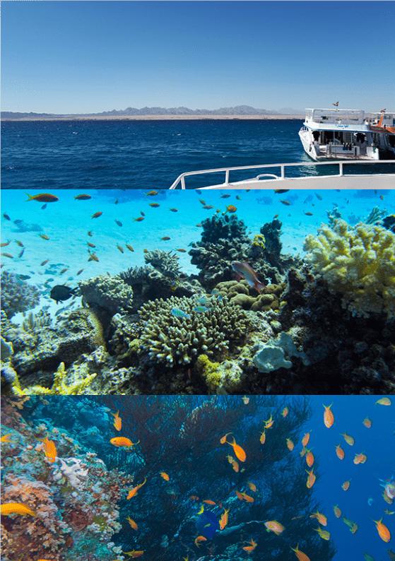 Tauchsafari Ägypten Schiff Riffe Korallen
