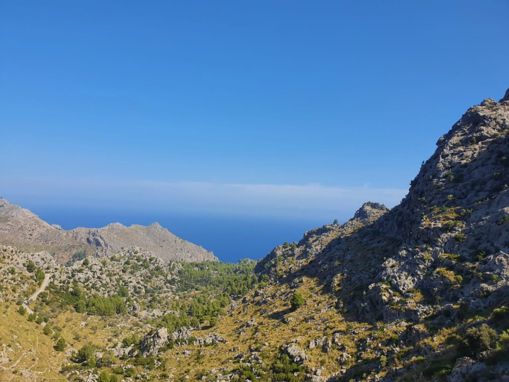 Mallorca Tauchen 5