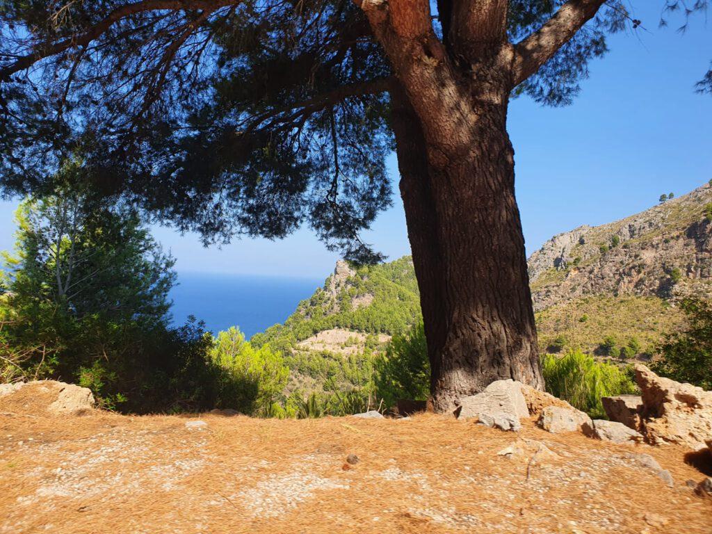 Mallorca Tauchen 4